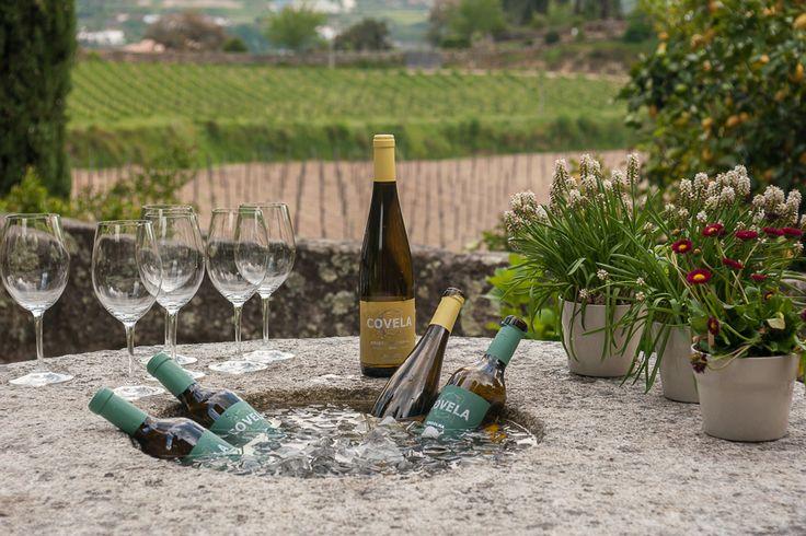 Provas de Vinhos - Enoturismo - Wine Tasting - Wine Tourism - Quinta de Covela