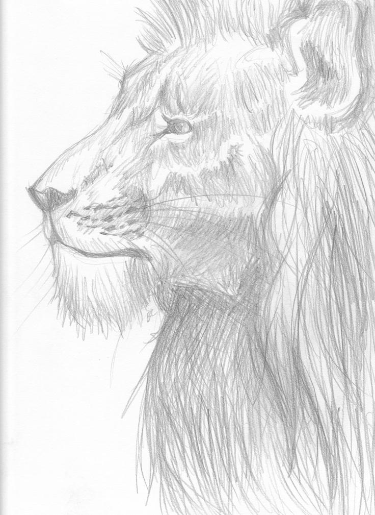 lion sketch   Lion sketch, Animal sketches, Tribal lion