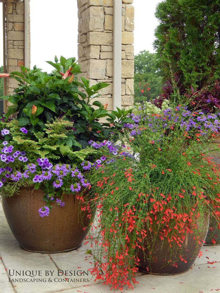17 Best Images About Container Gardening Unique By Design On Pinterest Container Gardening