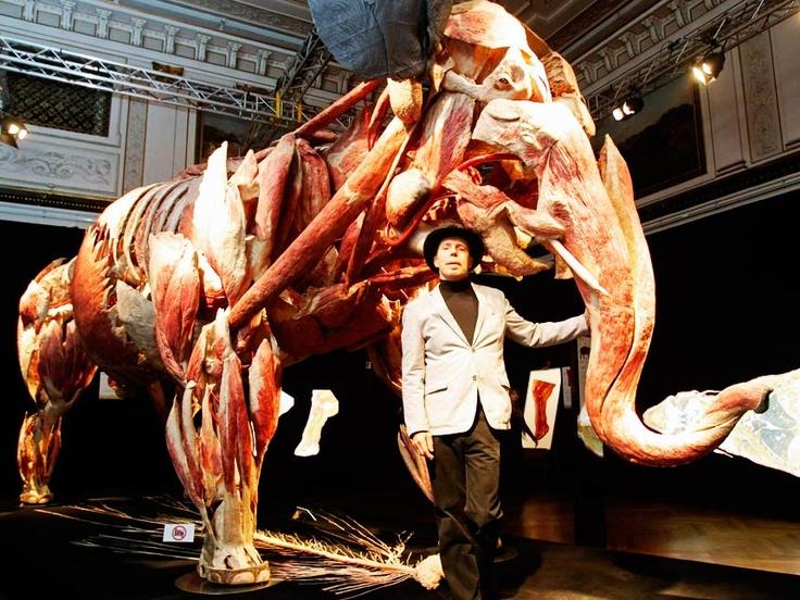 Body Worlds...Gunther von Hagens with plastified Elephant ...