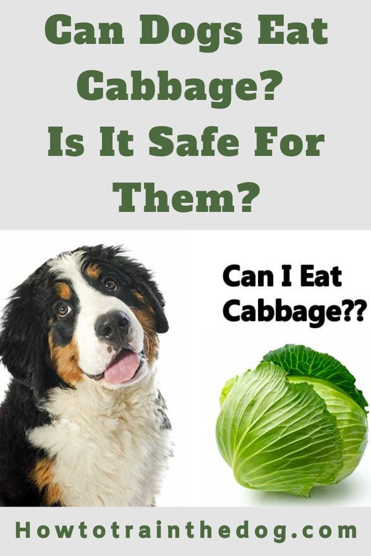 Can Dogs Eat Cabbage Is It Safe For Them Can Dogs Eat Dog Nutrition Dog Eating