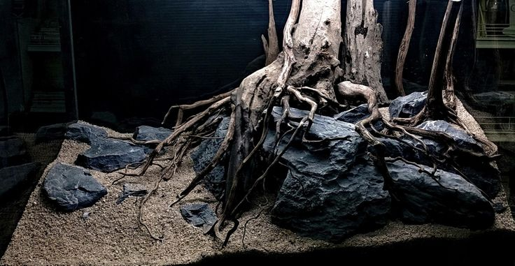 The Root? by Narongrit Dantragoonk. Gorgeous hardscape! https ...