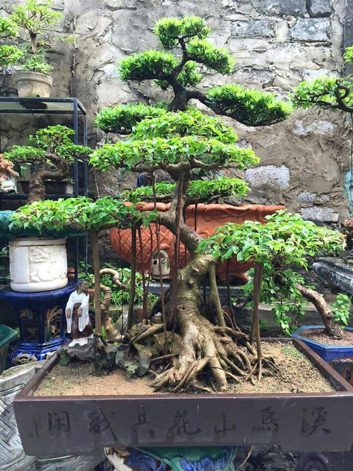 Small Garden Minecraft Ideas: 17 Best Images About Bonsai Trees, Etc. On Pinterest