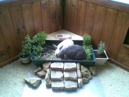 How to make a house rabbit littergarden posts popular for Homemade bunny houses