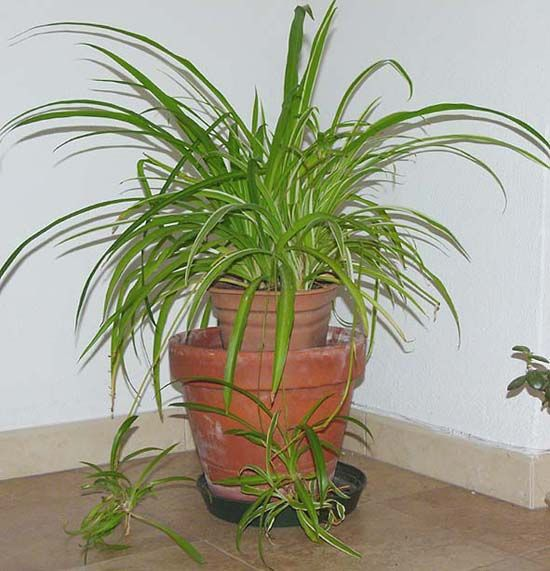 55 best images about plantas y cuidados on pinterest - Ver plantas de interior ...