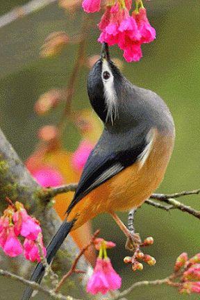 Resultado de imagen para gifs de passaros animados exoticos