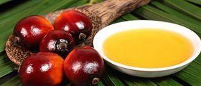 Le palmiste est l'amande contenue dans le noyau du fruit du palmier. L'huile de palmiste est une huile prodigieuse obtenue à partir de la noix de palme dont l'arbre appartient à la grande famille des palmiers. Utilisée comme huile pour cheveux et corps et dans la production de savons de toilette, l'huile de palmiste traditionnelle …