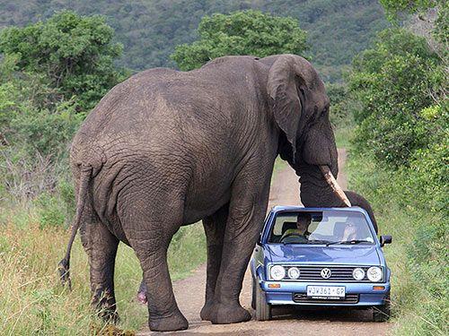 Hmmm.. Note to self: Hire a bigger car.