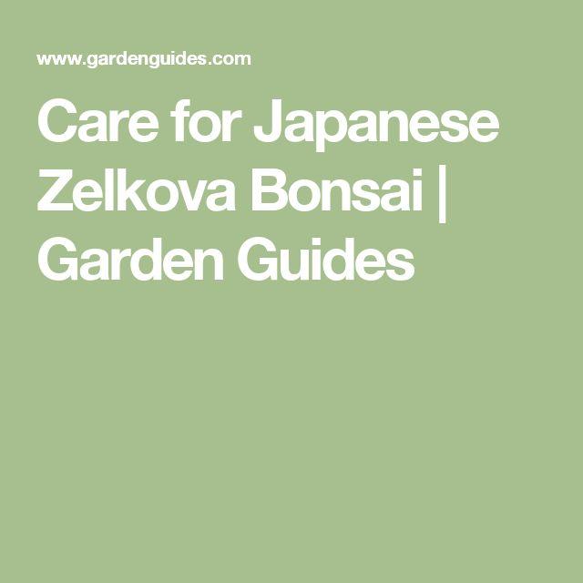 Care for Japanese Zelkova Bonsai | Garden Guides