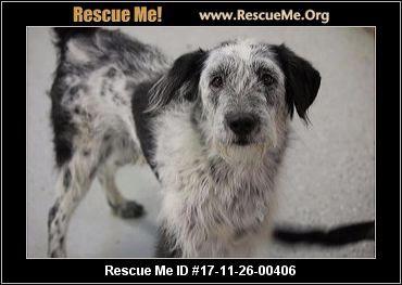 ― Arizona Border Collie Rescue ― ADOPTIONS ―RescueMe.Org