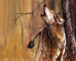 Huilende-wolf