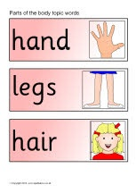 Parts of the body topic word cards (SB275) - SparkleBox (Can be turned into a book by adding card backing)