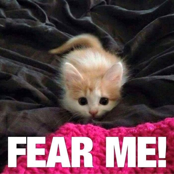 Funny Animal Memes Of The Day 32 Pics E9 Lovely Animals World Catmemes Funnycats Cute Animals Cute Little Kittens Cute Baby Animals