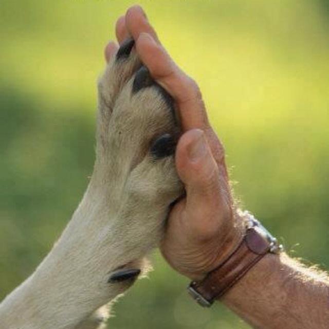 always: High Five, Dogs, Hands, Pet, Man Best Friends, Puppys, Things, Bestfriend, Animal