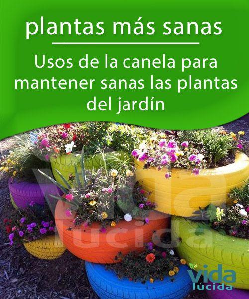 Mantén las plantas más sanas usando canela-