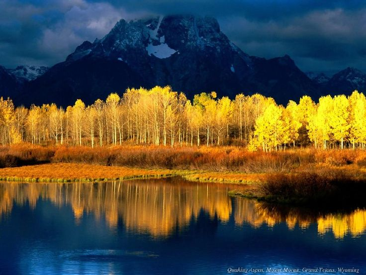 Source: Wyoming from Asta (via Jean Currie): Aspen Trees, Blue, Amazing Trees, Wyoming, Colorado, Living Rooms Colors, National Parks, Grand Teton National, Yellow