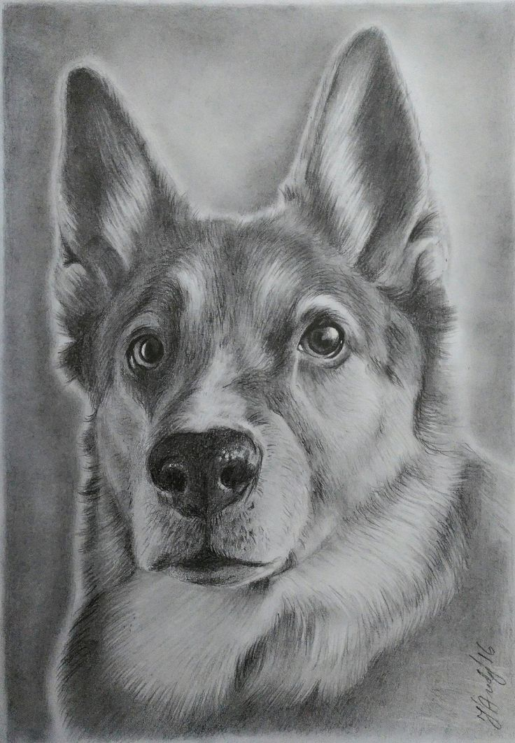 Dog pencils drawing
