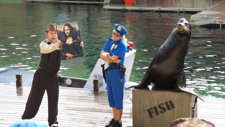 Sea Lion show at Sea World on the Gold Coast in Queensland, Australia