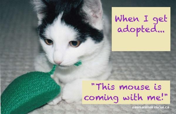 Meet kitten Jaxson. Playful, social and full of mischief. oasisanimalrescue.ca