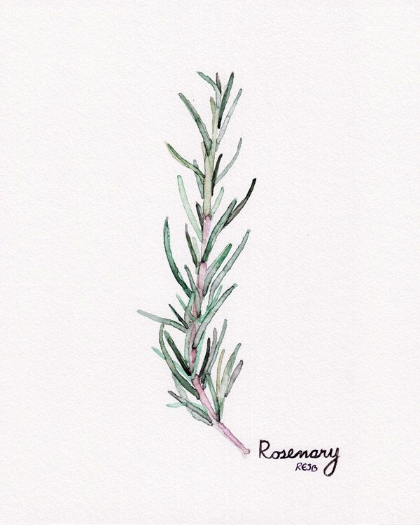 "Rosemary Herb Painting - Print from Original Watercolor Painting, ""Rosemary"", Kitchen Decor, Green Herb by TheColorfulCatStudio on Etsy https://www.etsy.com/listing/188688048/rosemary-herb-painting-print-from"