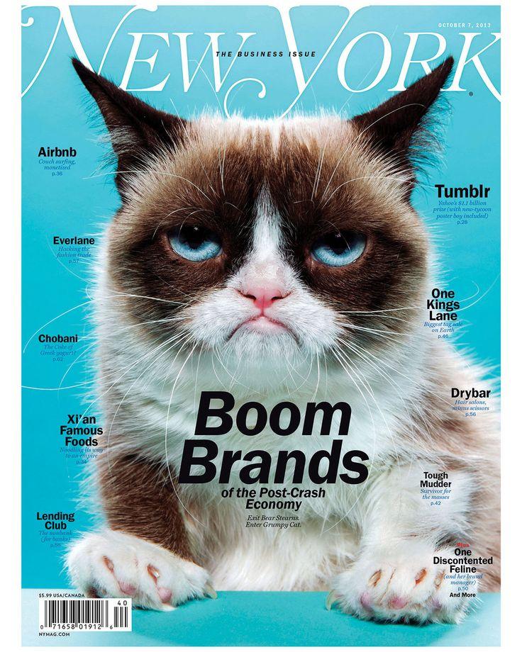 Grumpy Cat Has Died Grumpy cat, Cat memes, Cats