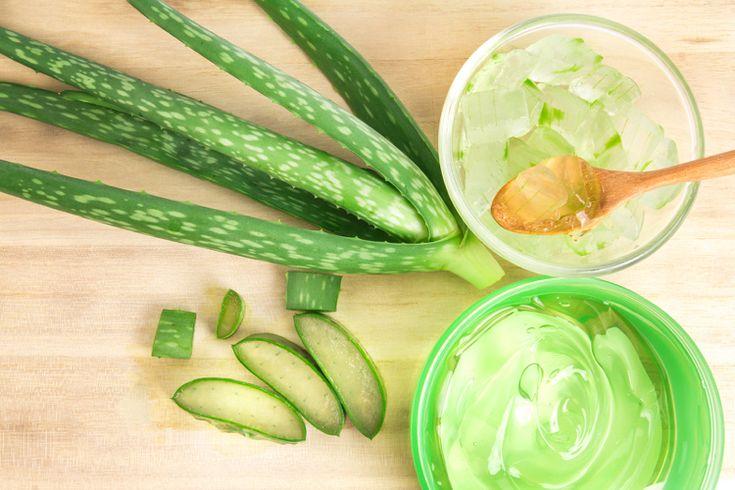 aloe vera pflanze anwendung innerlich gesundheit schönheit #beauty #aloevera #health #style