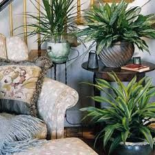 plants in house - Google Search