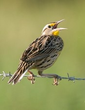 eBird Site can be used to keep track of birds found all throughout the year.  Great bird study tool. Bird ID.