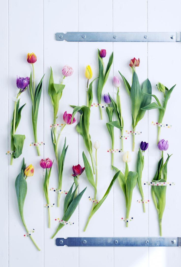 28 best name and kind of flowers images on pinterest floral fr jim hodges donner cest fleurir fleurs art expo izmirmasajfo