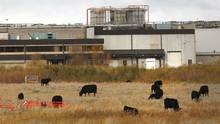 A Brazilian-controlled company is taking over operations of the Alberta beef-packing plant where an E.coli outbreak led to the country's largest-ever recall of red meat.