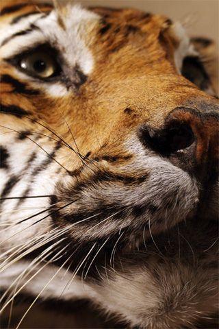 Latest Animals iPhone Wallpaper | Mariusz Dabrowski Blog 8