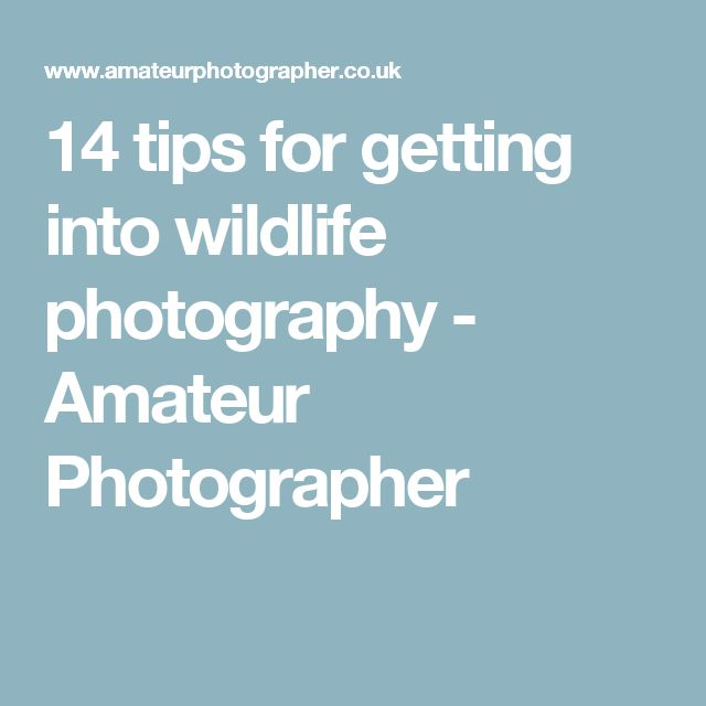 14 tips for getting into wildlife photography - Amateur Photographer