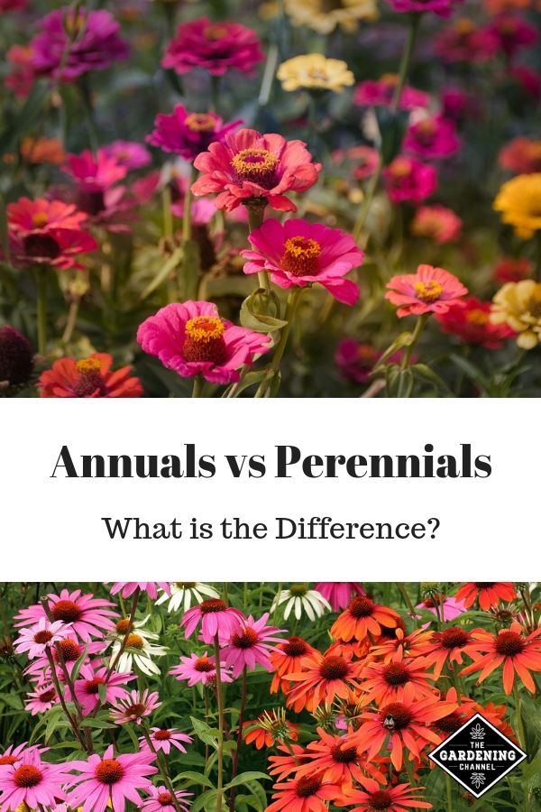 Annuals Vs Perennials What Is The Difference Annuals Vs