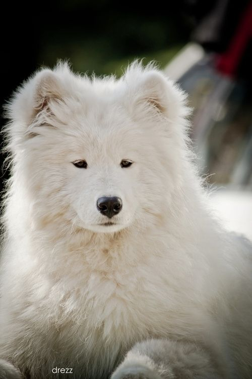 YESSSS OMGOSH MY FUTURE DOG!!