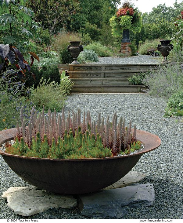 Gravel pathways with huge bowl planter focal point - Orostachys is a very cold-hardy succulent (to -32 degrees) with bloom spires.