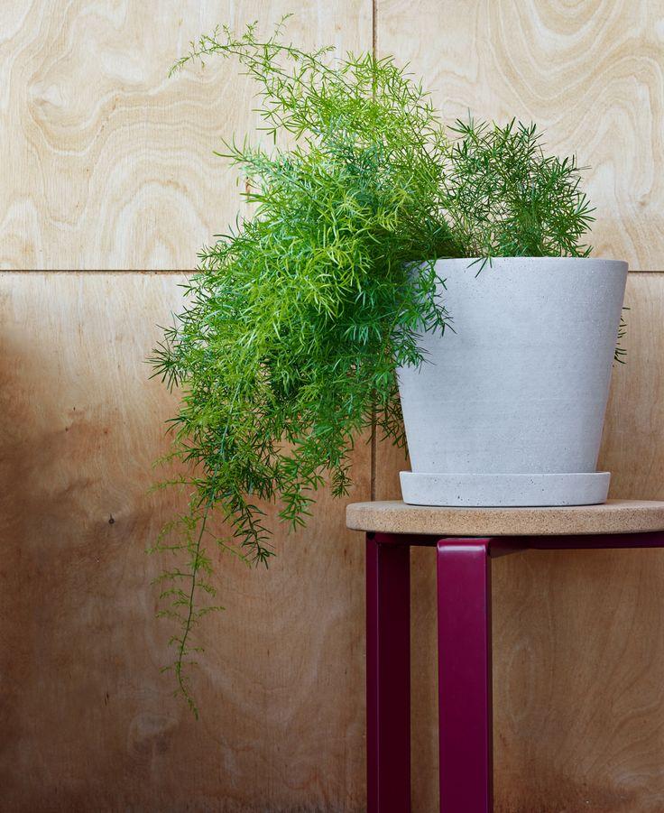 Flowerpot with saucer XL
