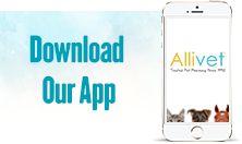 Dog Skin Allergy Medicine, Supplements And Medication #dog #skin #allergy #medicine, #dog #skin #allergy #medication, #dog #skin #care #products, #dog #skin #allergy #shampoo, #dog #skin #allergy #food, #dog #skin #allergy #cream, #dog #skin #allergy #sup