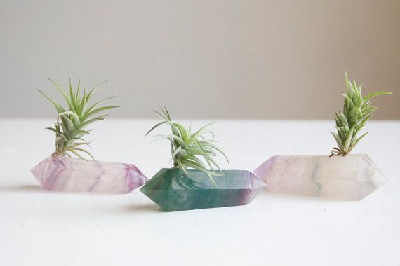 Crystal fragments are re-imagined as planters for tiny tillandsias.