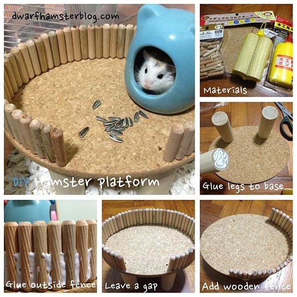 #DIY #hamster platform. Detailed #instructions at http://dwarfhamsterblog.com/diy-hamster-platform