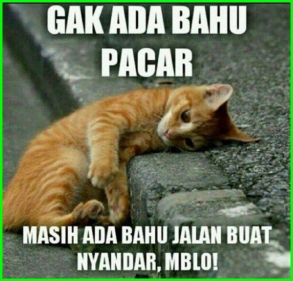 Download 87+  Gambar Kata Kucing Lucu Dan Imut Paling Lucu HD
