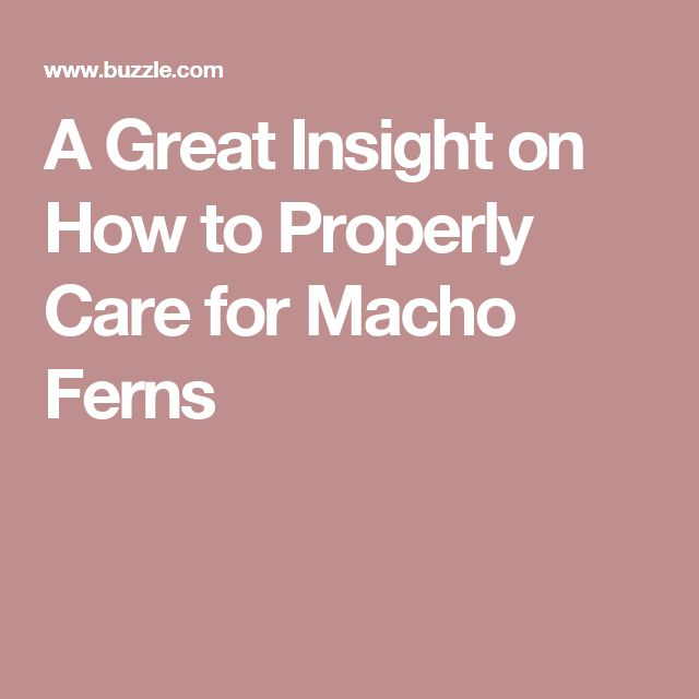 A Great Insight on How to Properly Care for Macho Ferns