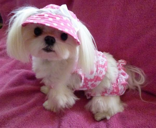 a dog in a visor and a bikini . . . a grin for SURE
