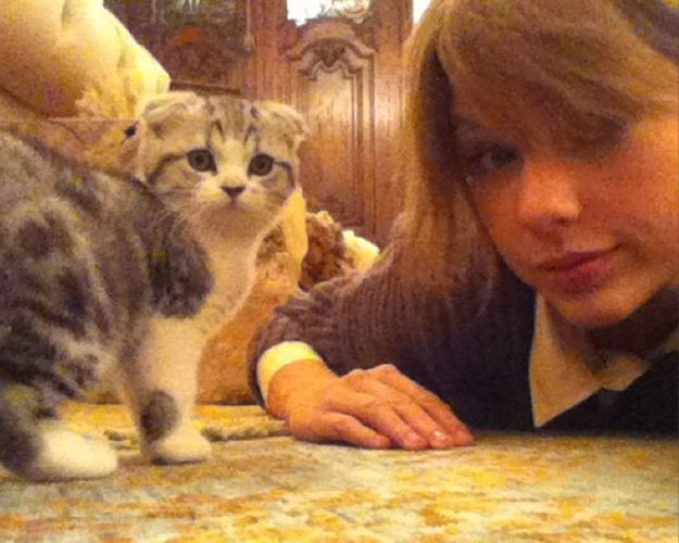 "I got Meredith! Which Of Taylor Swift's Cats Are You?  (I don't know what these results mean. Flannery? Jessica? Does this align with my Myer's Briggs and astrological sign? I'm going to start introducing myself at parties as ""Aligning with Taylor Swift's cat Meredith"")"