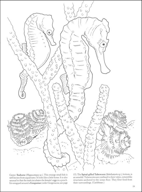 69 best coloring pages for adults images on pinterest | adult ... - Coral Reef Coloring Pages Kids
