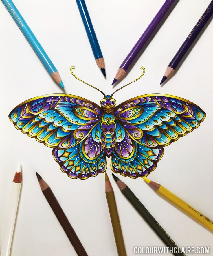 From Ivy & the Inky Butterfly by Johanna Basford, coloured with Polychromos pencils