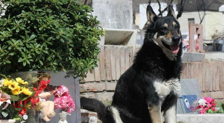 D.E.P: Capitán, el perro que vivía junto al tumba de su dueño, ha fallecido  #capitan #cordoba #argentina #perro #perros #cementerio #tumba #viral #noticias #noticias #dog #dogs #rip #pet #pets #animales #animal