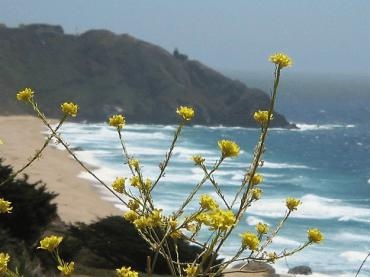 Wildflower hikes bloom along the Central Coast