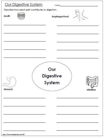 Ap biology animal systems essays