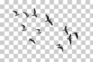 Bird Flight Gulls Flying Bird Low Angle View Of Flying Birds Png Clipart Birds Flying Background Images For Editing Clip Art