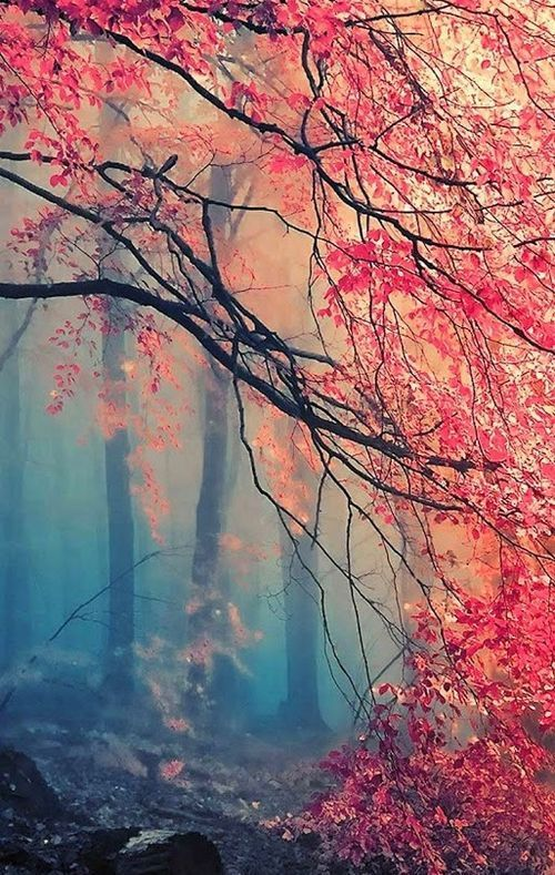 Misty Japanese maple (good for phone background!) | Photography ... - Wallpaper Zone
